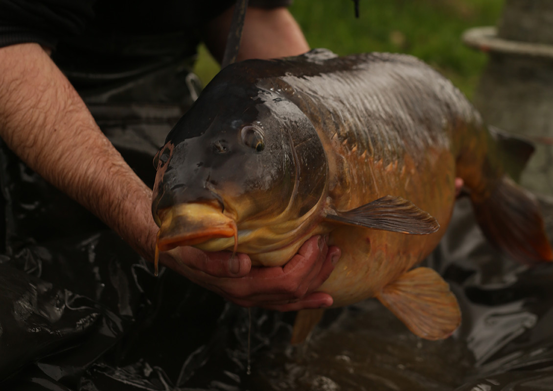 a2137ac349c Thinking Anglers News - Myles Gibson puts our new mat through it s paces